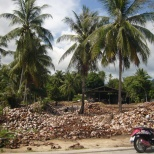Koh Pangan coconut cemetery