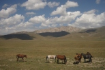 Horses in the grasslands
