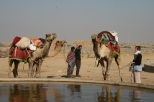 With the camels, Jaisalmer