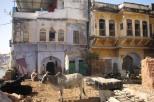 Yard in Pushkar
