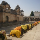 Drying Sarees