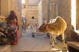 Alley in Jaisalmer