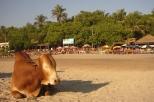 Relaxing in Goa