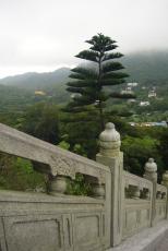 Chinese flair, Lantau Island (HK)
