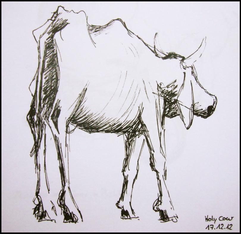 The nice cow I