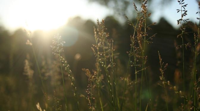 Sonnenscheinillusionen. Sitzenbleiben ist realistisch
