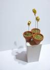 Schreiköpfchen im Topf auf Sockel (Höhe insges. ca. 18 cm)