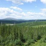 Endlose Lärchenwälder